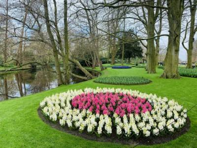 Some of the flowers you can see when visiting Keukenhof - these are in a neat circle - white flowers on the outside and pink inside