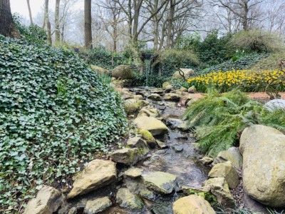 One of the small streams and waterfalls in the garden - this is surrounded by vegetation is quite rocky