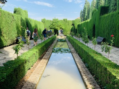 Part of the Generalife gardens - a water channel with water lilies, bushes and hedges