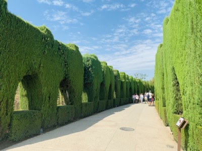 Part of the walkway to Generalife - neat, cut out hedges.  When you visit the Alhambra you walk up these to the Alhambra gardens