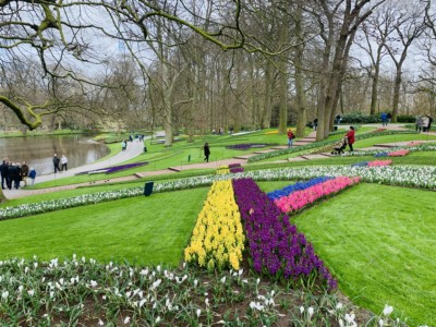 Part of the Keukenhof gardens - you can stripes of pink, blue, yellow and purple flowers across the grass/lawn.  A river can be seen on the left