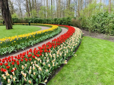 Some of the flowers you can see when visiting Keukenhof 2020 - these are in circular stripes - they are white, red and yellow