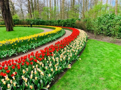 Flower beds in stripes.  There are yellow, red and white stripes.