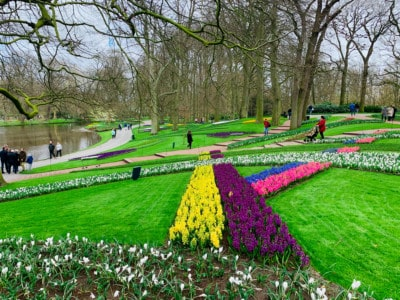 The neat flower beds.  There are criss criss beds - purple, yellow, pink and blue.  You can see the trees and the river to the left