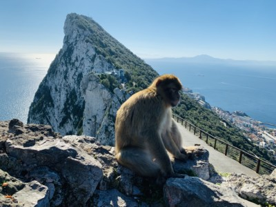 A monkey sat on a rock in front of the Rock of Gibraltar.  You can see the sea in the background