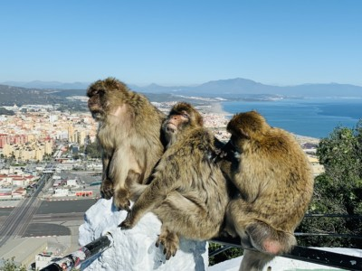Three Gibraltan monkeys on a railing overlooking the land and sea