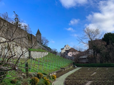 The rose gardens in Rapperswil.  This is bare slope as the picture was taken in winter.  You can see one of the turrets of the castle in the background.